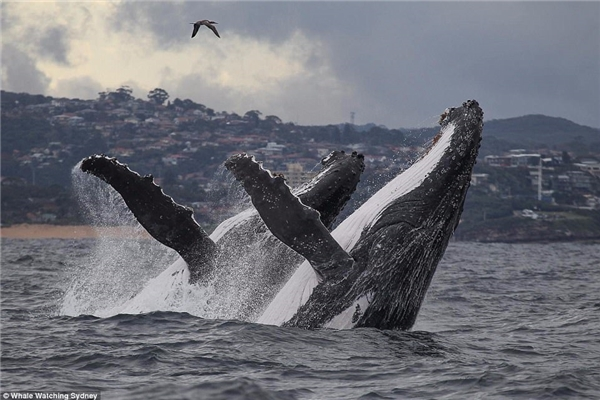 mơ thấy cá voi
