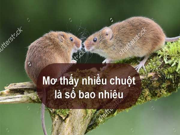 Điềm lành hay điềm giữ khi mơ thấy chuột