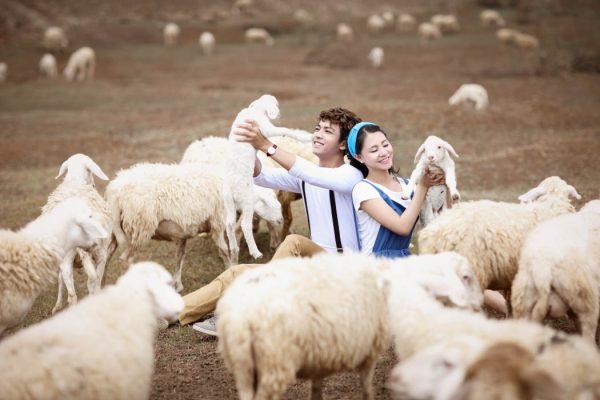 Giải mã giấc mơ thấy cừu thường có điềm báo gì