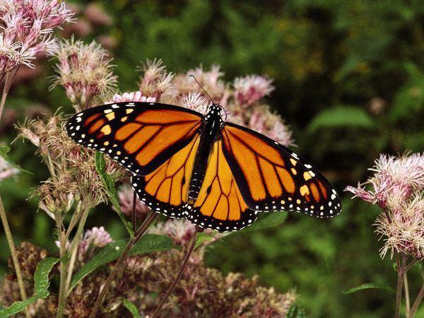 Mơ thấy bướm là điềm báo lành hay dữ?