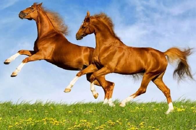 Nằm mơ thấy con ngựa